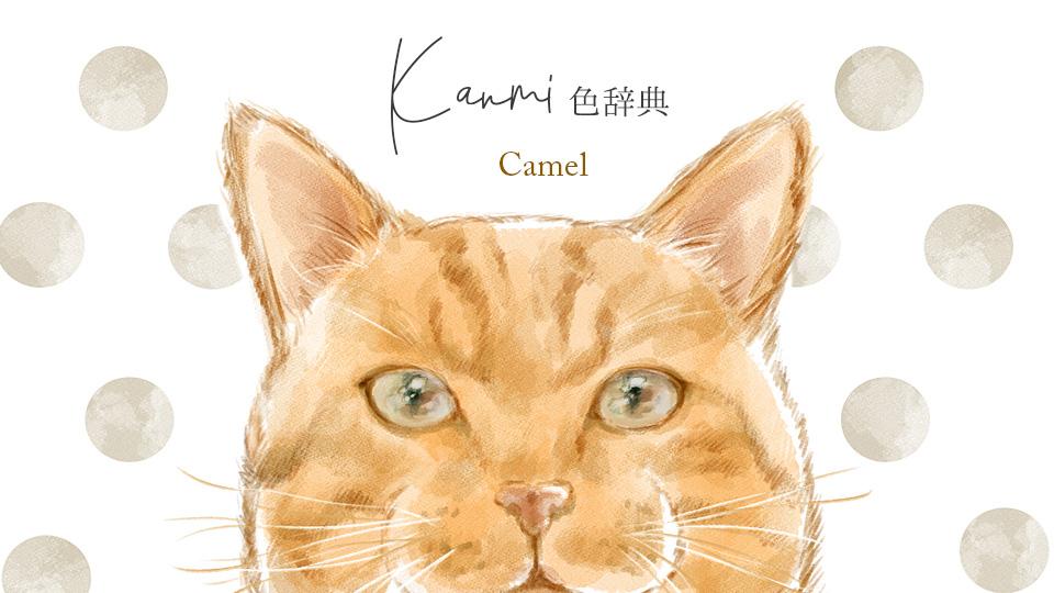 Kanmi.どら CAMEL